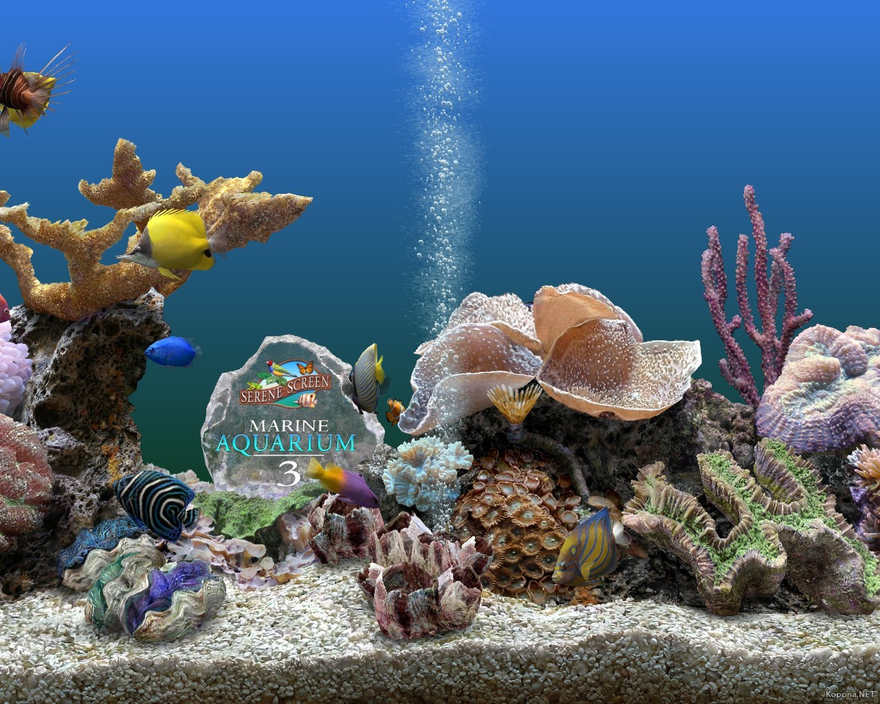 Marine Aquarium Services Marine Aquarium Pictures to pin on Pinterest