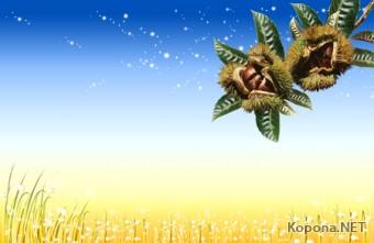 Красивый природно-летний PSD-исходник - 43 (PSD)