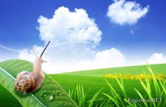 Красивый летне-пейзажный PSD-исходник - 60 (PSD)